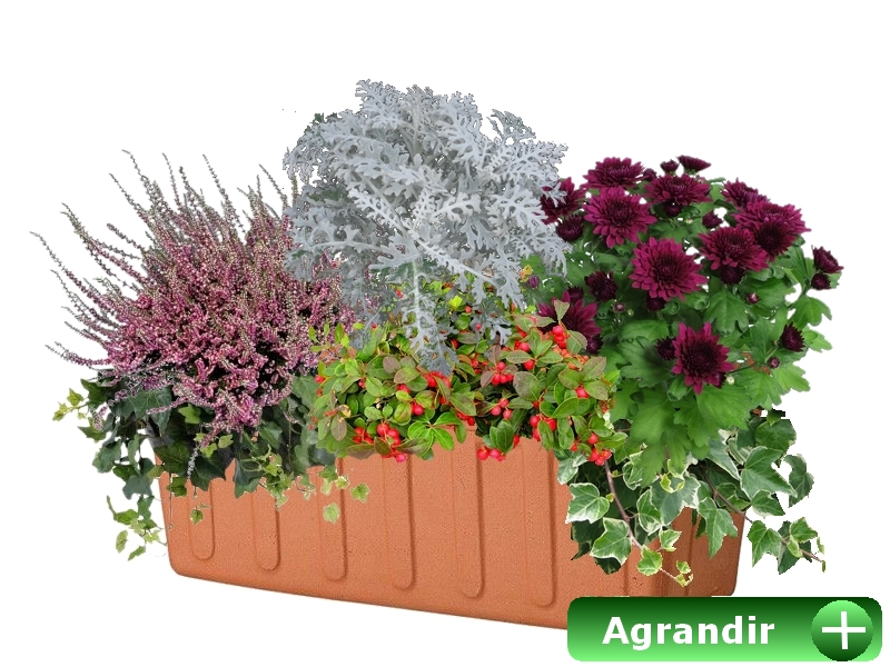 Faire ses jardini res d 39 automne for Plante exterieur hiver ete