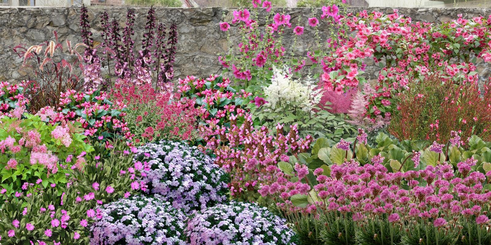 Cr er un massif de fleurs roses - Rose tremiere en pot ...