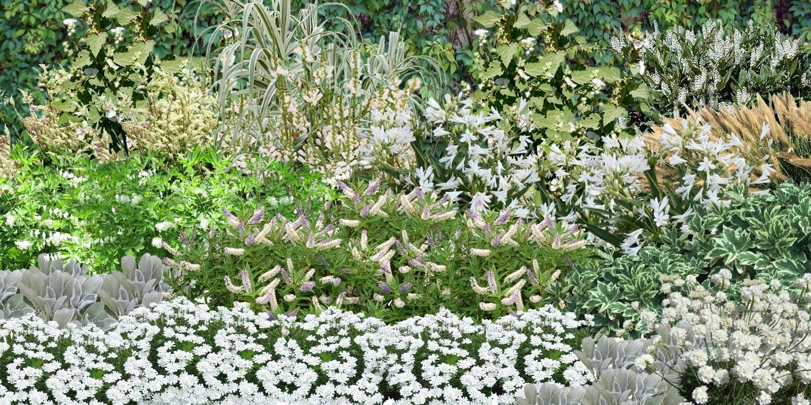 cr er un massif de fleurs blanches. Black Bedroom Furniture Sets. Home Design Ideas