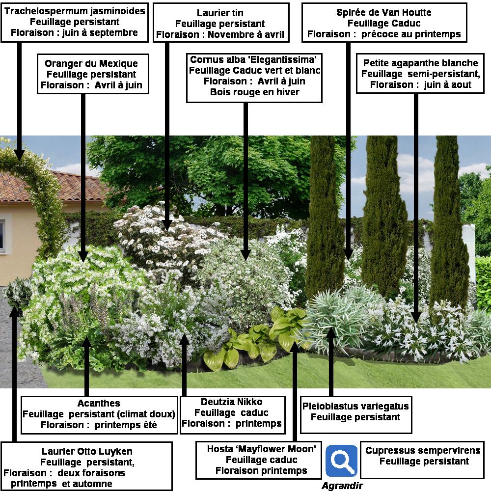 Cr er un massif d arbustes vert et blanc - Creer un massif ...