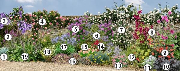 Comment Fleurir Un Mur Ensoleille Au Sud Dans Le Jardin