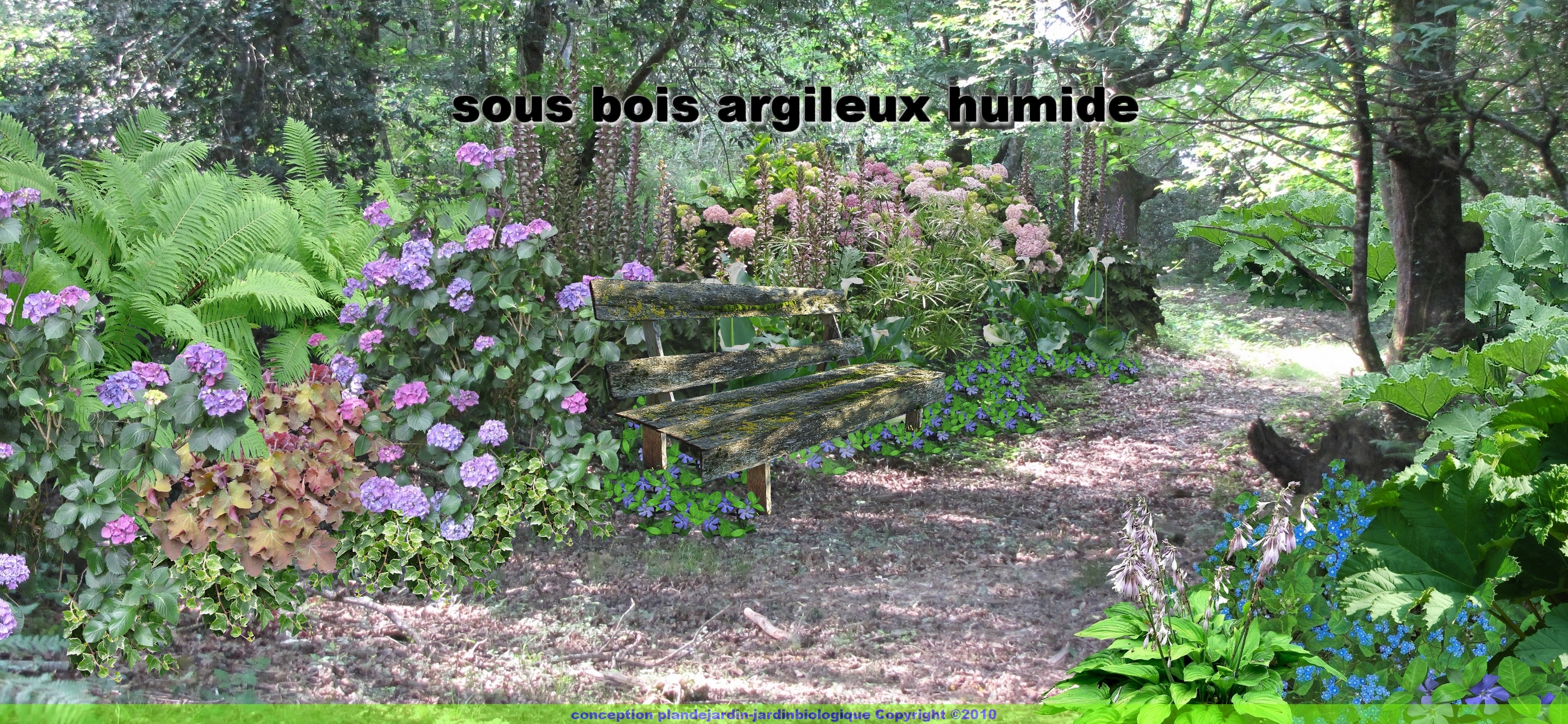 Jardin de sous bois planter sous un arbre for Arbre de jardin pour ombre