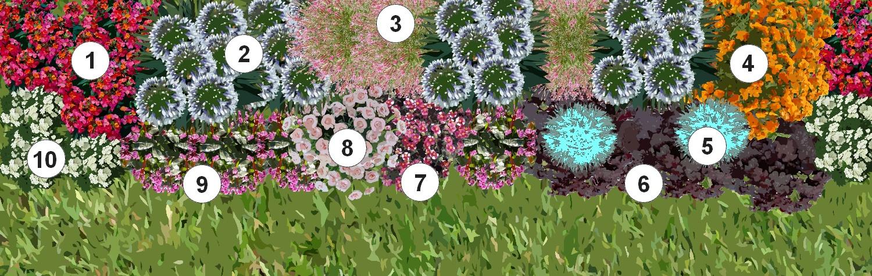 Cr er une plate bande de plantes vivaces for Plante arbustive fleurie