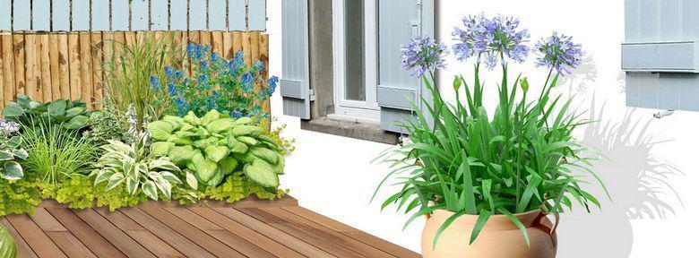 agapanthes en pot sur une terrasse?v=1cjhnn3