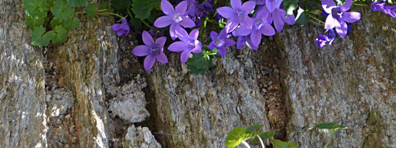 allées jardins page numéro quatre: allée fleurie