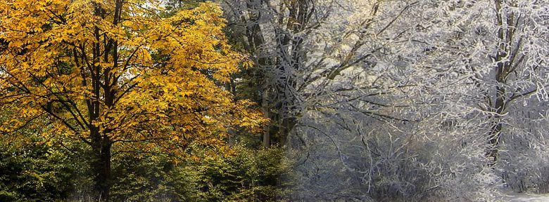 entretien et taille des arbustes et des arbres d 39 ornement l 39 automne et l 39 hiver. Black Bedroom Furniture Sets. Home Design Ideas