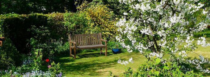 Choisir un arbre pour un petit jardin for Petit portillon pour jardin