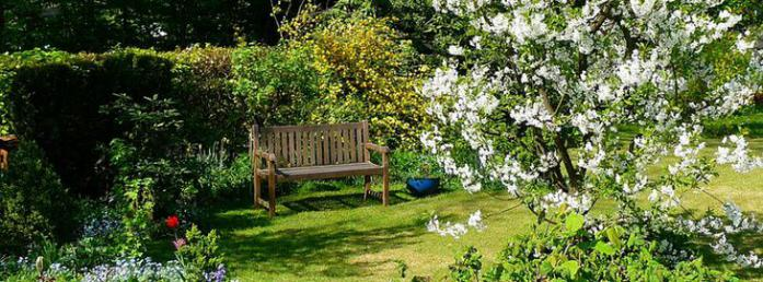 Choisir Un Arbre Pour Un Petit Jardin