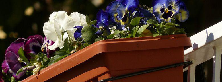 fleurir un balcon l 39 hiver et le printemps. Black Bedroom Furniture Sets. Home Design Ideas