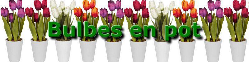 Bulbes de printemps en pot for Arrosage des bulbes