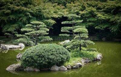 Amenager un jardin japonais jardin zen for Arbuste pour jardin japonais