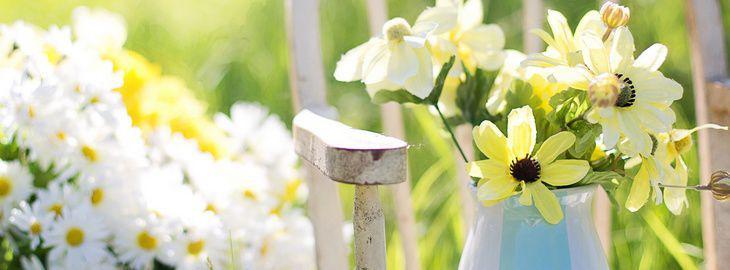 Un jardin de fleurs couper jardin de fleuriste for Fleurs dans un jardin