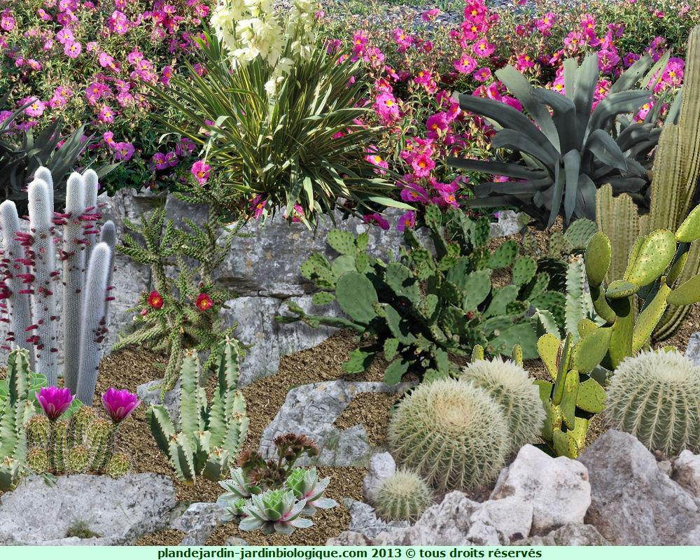 Faire un jardin de cactus exemple for Modele amenagement jardin