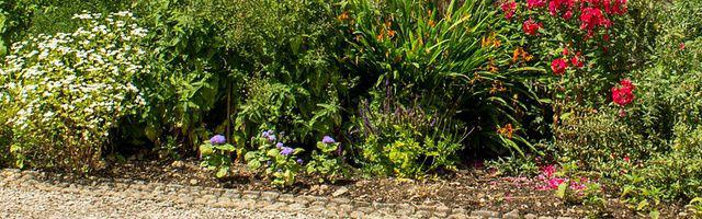 Massif d arbustes pour un petit jardin for Plantes vivaces pour jardin anglais