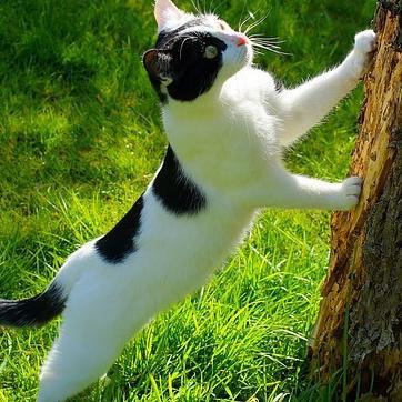 emp cher le chat de faire des d g ts au jardin potager et d agr ment. Black Bedroom Furniture Sets. Home Design Ideas