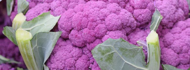 Semis Du Chou Fleur Hybride Violet De Sicile
