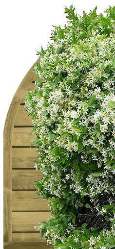 Cloison Plante fleurir une cloison de jardin ou un claustra