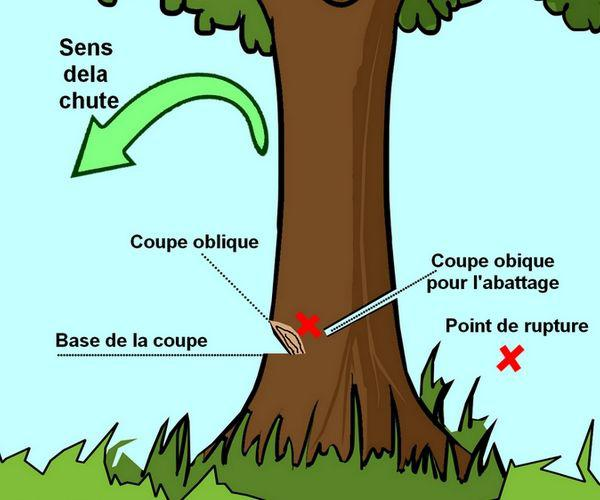 couper un arbre sans tronconneuse id es d coration. Black Bedroom Furniture Sets. Home Design Ideas