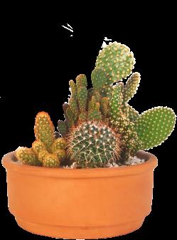 cactus culture hivernage. Black Bedroom Furniture Sets. Home Design Ideas