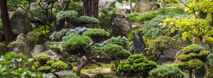 l art du niwaki comment tailler les arbres et arbustes. Black Bedroom Furniture Sets. Home Design Ideas