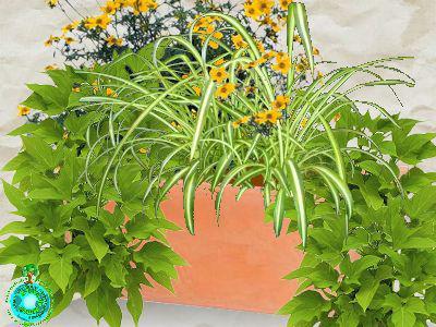 jardini res fleuries faire ses jardini res entretien des jardini res. Black Bedroom Furniture Sets. Home Design Ideas