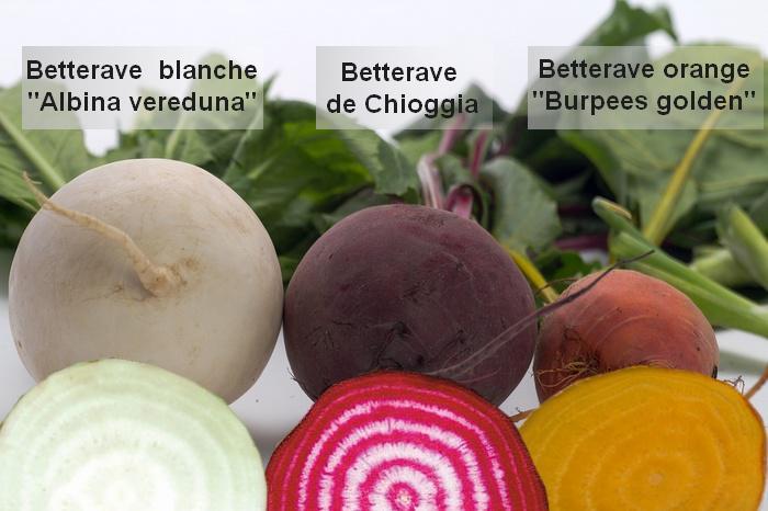 Betterave rouge culture bio vari t s - Comment cuisiner les feuilles de betterave rouge ...