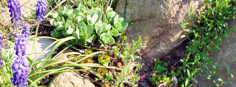 Creer une rocaille rocaille de fleurs rocaille plantes - Faire une rocaille ...