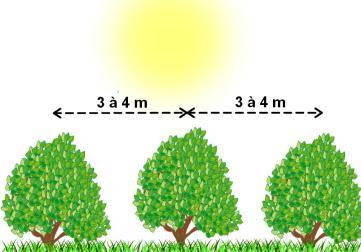Distances de plantation entre les arbres fruitiers - Distance plantation arbre maison ...