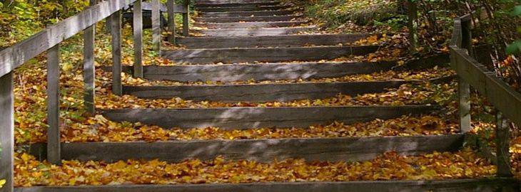 Faire un escalier de jardin en rondins de bois