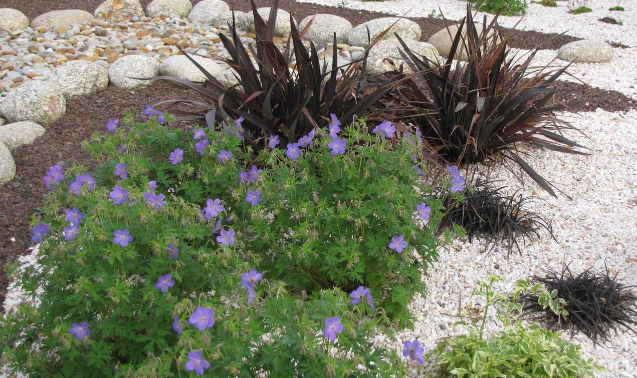 autres exemples. amenagement jardin avec cailloux impressionnant ...