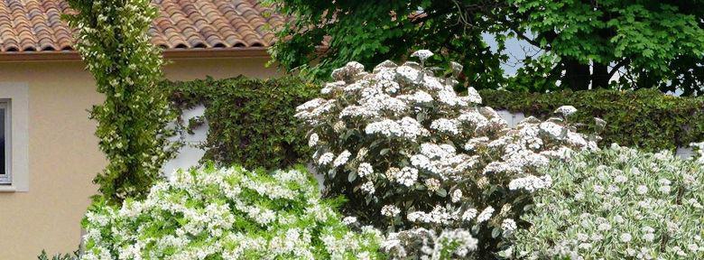 cr er un massif d arbustes vert et blanc. Black Bedroom Furniture Sets. Home Design Ideas