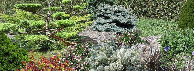 Rocailles Au Jardin Avec Des Conifères Nains :