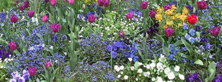 Fiches pratiques des massifs au jardin for Amenagement massif de fleurs