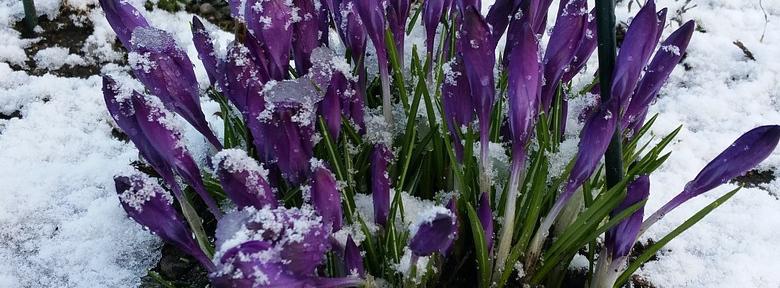 Les fleurs d\'hiver :
