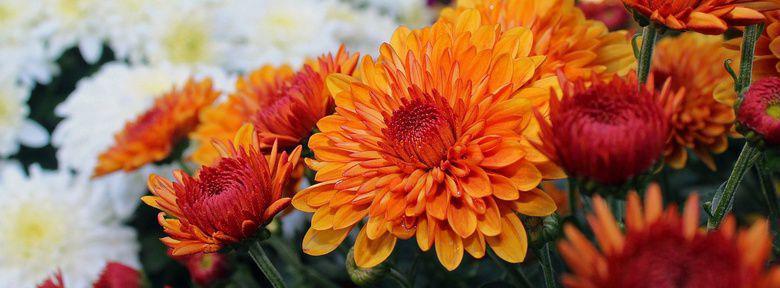 Cr er un massif de fleurs d 39 automne for Fleurs automne