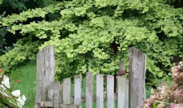 ginkgo biloba l arbre au 40 cus un arbre venu du fond des ages. Black Bedroom Furniture Sets. Home Design Ideas