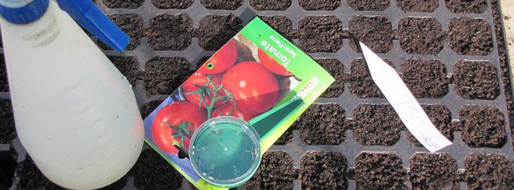 Tomate culture bio entretien biologique - Combien de graines de nigelle par jour ...
