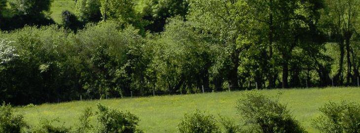 Haie bocag re pour jardin biologique for Cout haie jardin