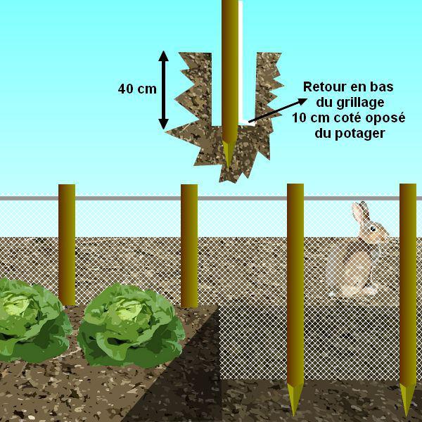 faire fuir les lapins du jardin et protéger les cultures.