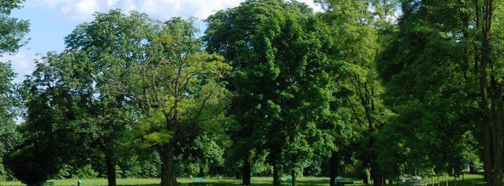 cr er un jardin avec des grands arbres plan d 39 am nagement. Black Bedroom Furniture Sets. Home Design Ideas