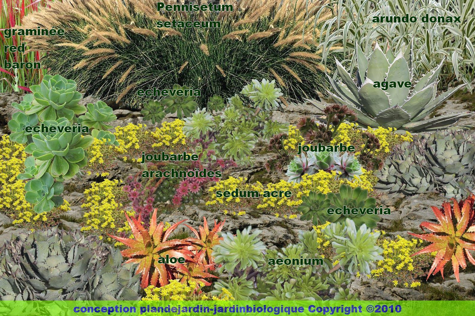 cr er un jardin de plantes grasses jardin de succulentes. Black Bedroom Furniture Sets. Home Design Ideas
