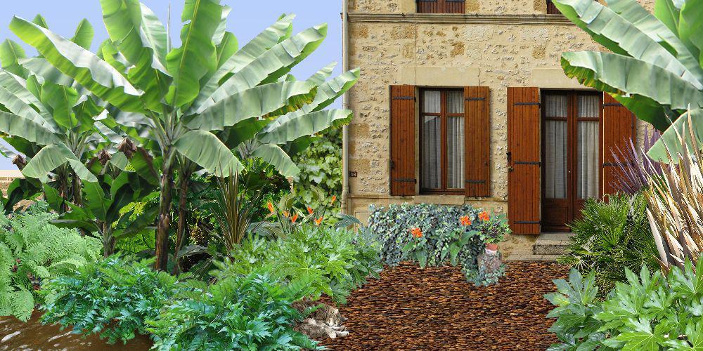 Cr er un jardin exotique plan de jardin exotique for Plante exotique jardin