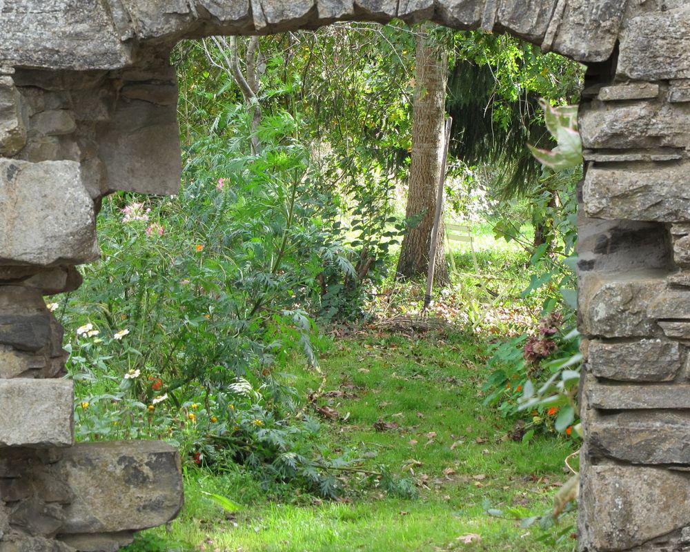Fleurs de jardin sauvage for Jardin sauvage