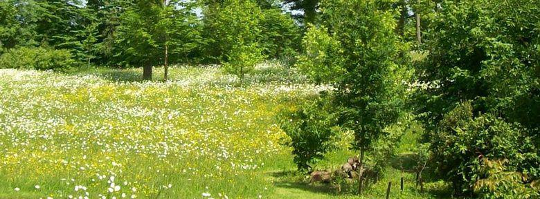Cr er un jardin sauvage for Organiser un jardin