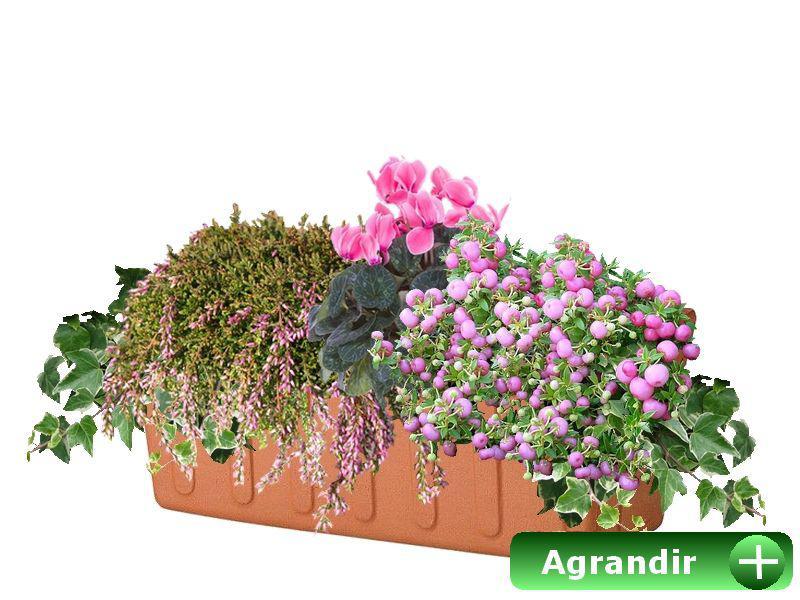 Faire Ses Jardinieres D Automne