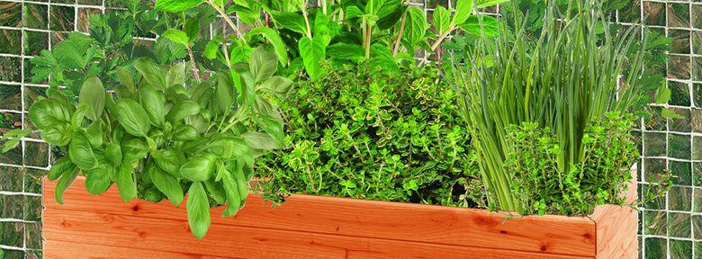 faire une jardini re de fines herbes. Black Bedroom Furniture Sets. Home Design Ideas