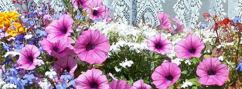 jardini res fleuries faire ses jardini res entretien des. Black Bedroom Furniture Sets. Home Design Ideas