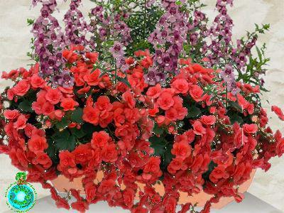 Jardini res fleuries faire ses jardini res entretien des - Fleurs d ete plein soleil ...