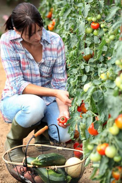 Fiches De Culture Bio Le Potager Et Les Legumes