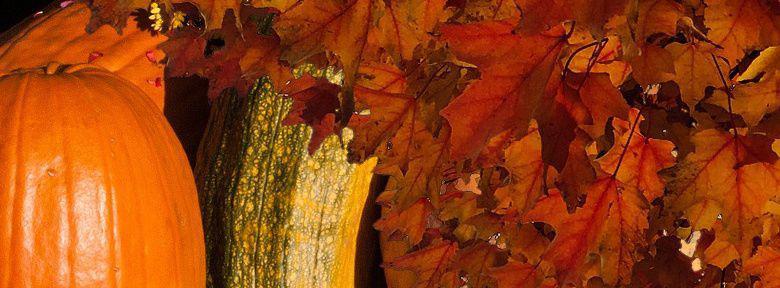 Que planter en octobre cool planter en octobre potager with planter en octobre potager le - Que planter en novembre au potager ...